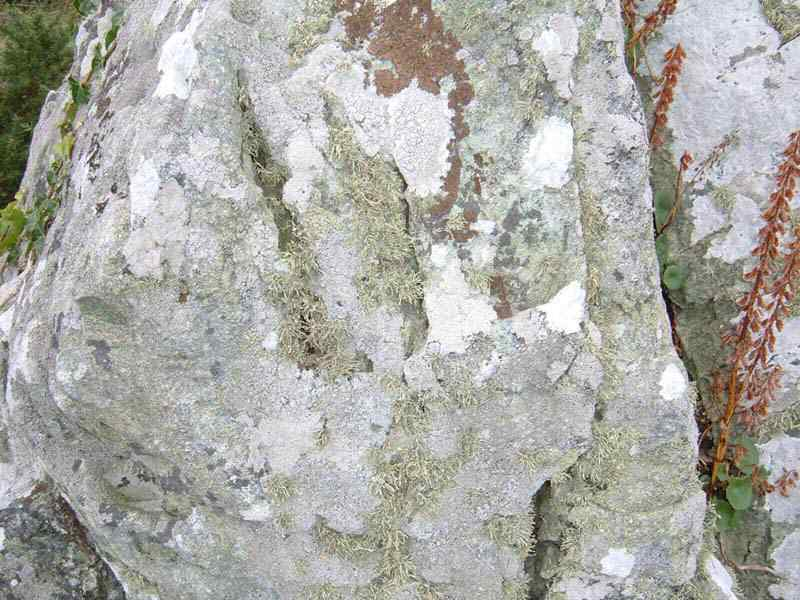 Anglesey, Trearddur Bay Standing Stone - close up