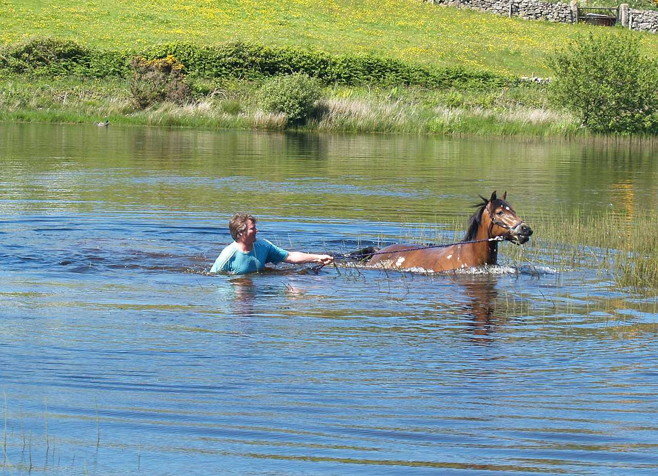 Anglesey, Mynydd Bodafon Mountain, Horse and Owner having a swim 300509